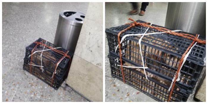 Desgarrador caso de perro que fue abandonado dentro de una caja, en terminal de buses